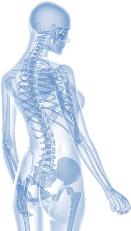elements_osteopathy_skeletonperson
